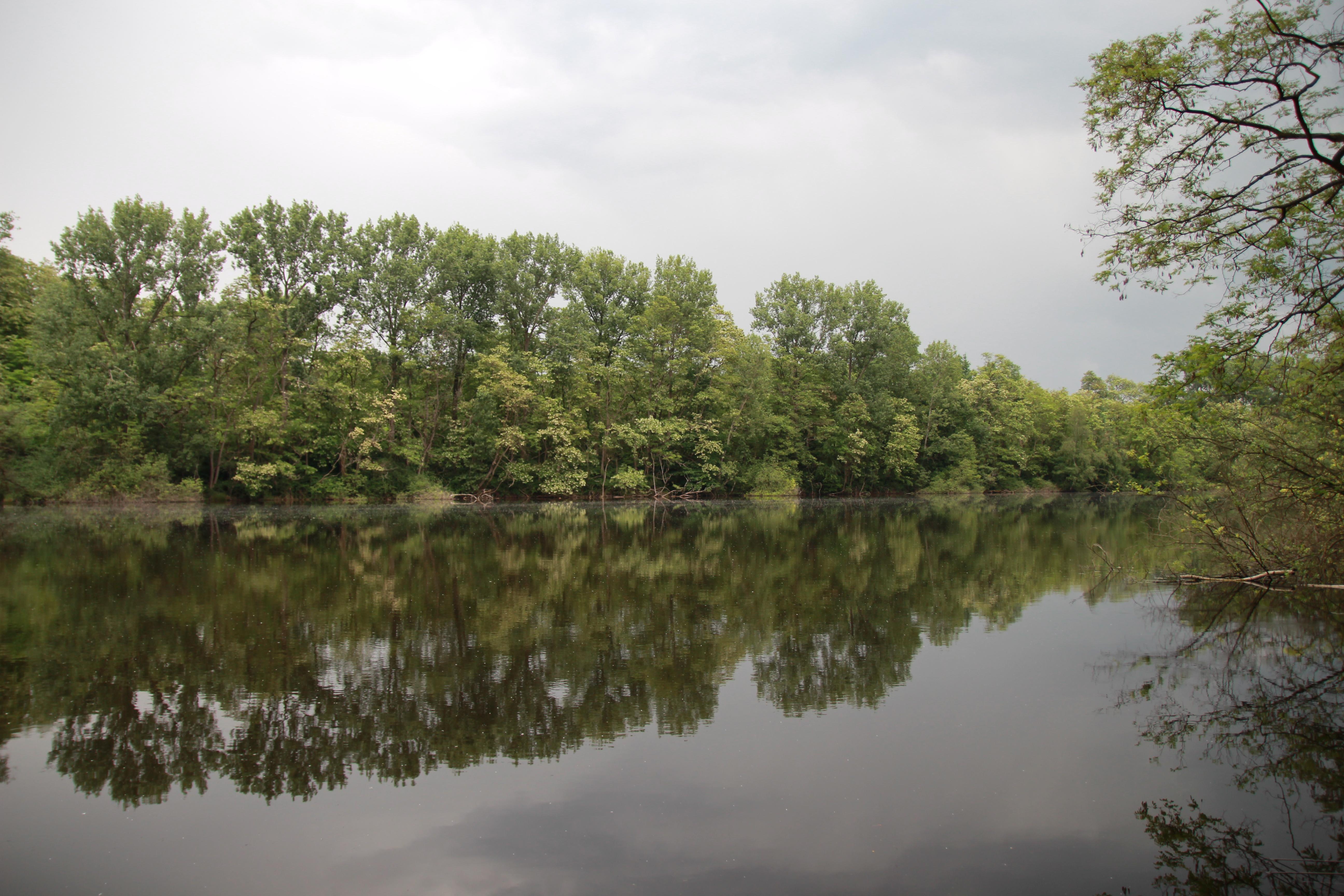 Hauptteil des Sees war komplett leblos, alle Karpfen versammelten sich in einer Bucht