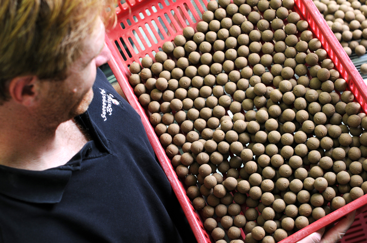 Fischboilies von Successful Baits als Freezer Bait