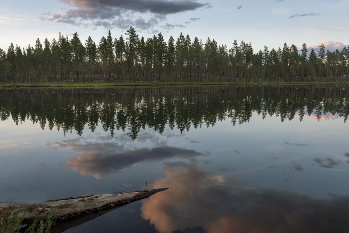 Sommer in Schweden! Ein Paradies für Angler und Kraniche...
